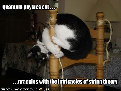funny-pictures-physicist-cat-tries-to-understand-string-theory